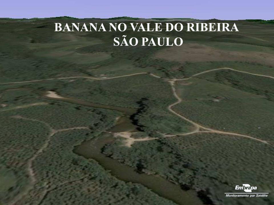 BANANA NO VALE DO RIBEIRA SÃO PAULO