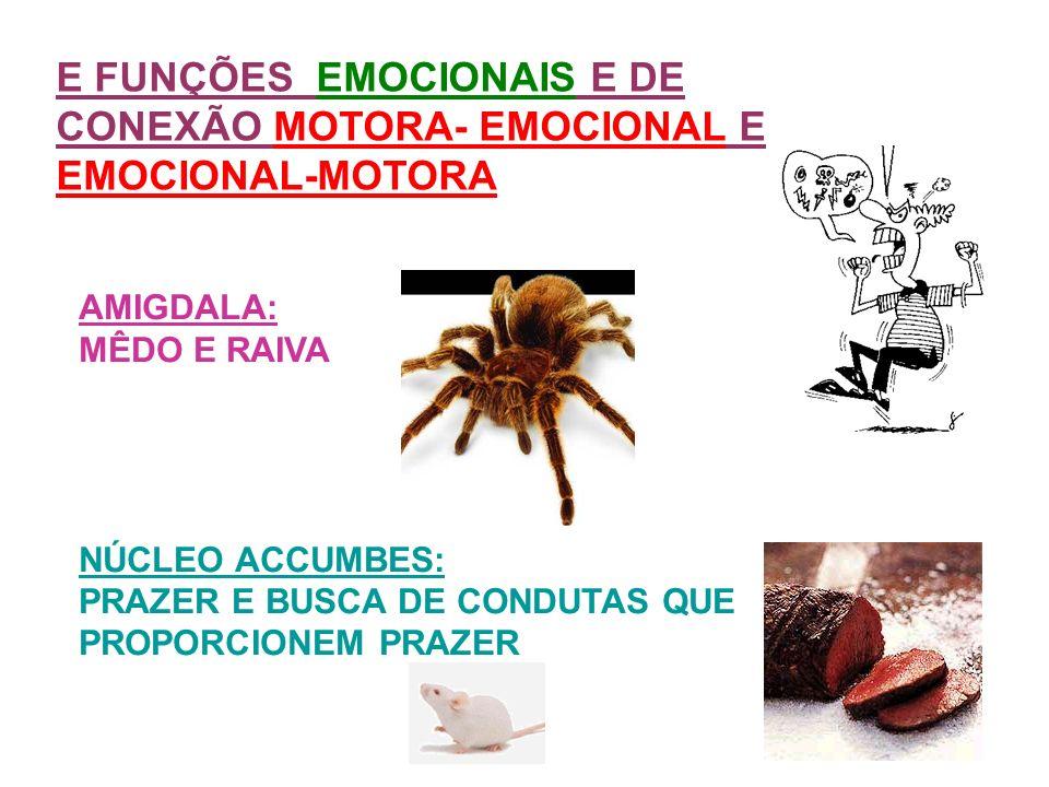 E FUNÇÕES EMOCIONAIS E DE CONEXÃO MOTORA- EMOCIONAL E EMOCIONAL-MOTORA AMIGDALA: MÊDO E RAIVA NÚCLEO ACCUMBES: PRAZER E BUSCA DE CONDUTAS QUE PROPORCI