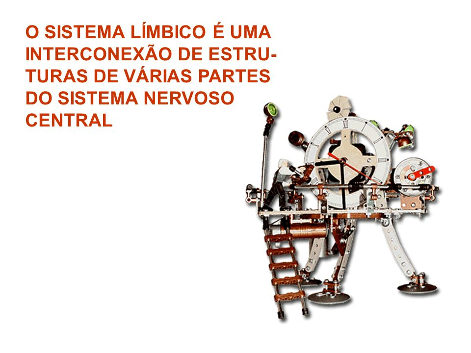 O SISTEMA LÍMBICO É UMA INTERCONEXÃO DE ESTRU- TURAS DE VÁRIAS PARTES DO SISTEMA NERVOSO CENTRAL