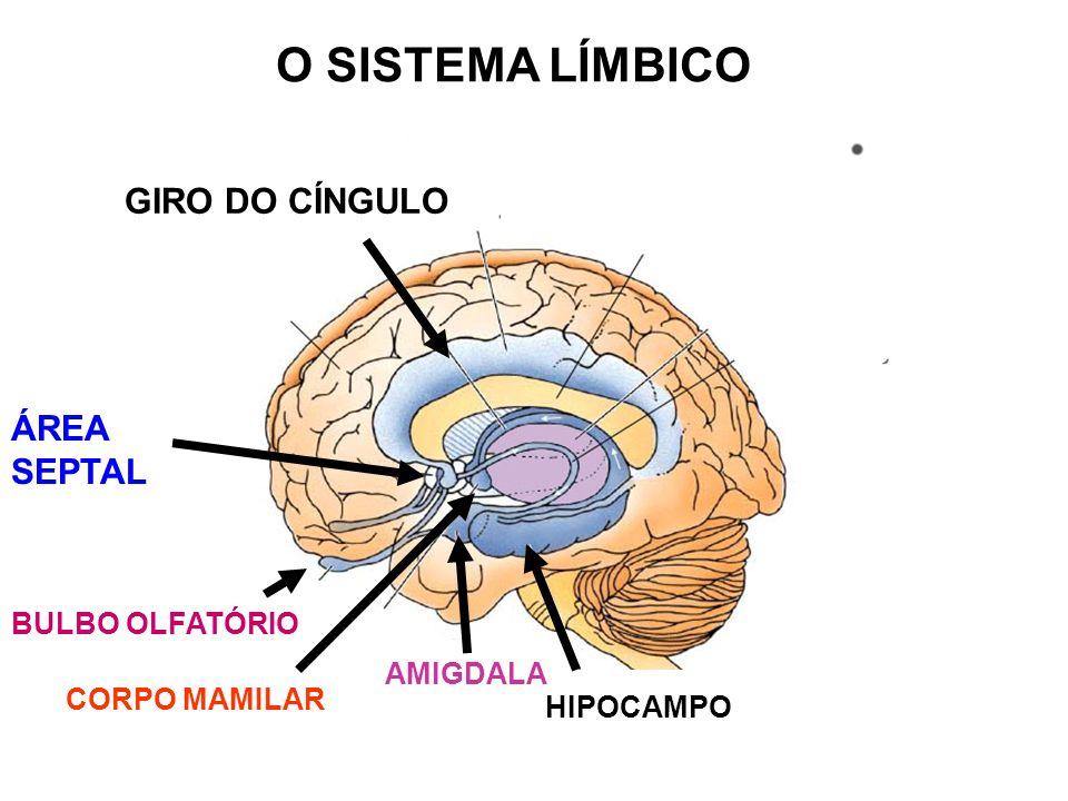 O SISTEMA LÍMBICO ÁREA SEPTAL BULBO OLFATÓRIO GIRO DO CÍNGULO AMIGDALA HIPOCAMPO CORPO MAMILAR