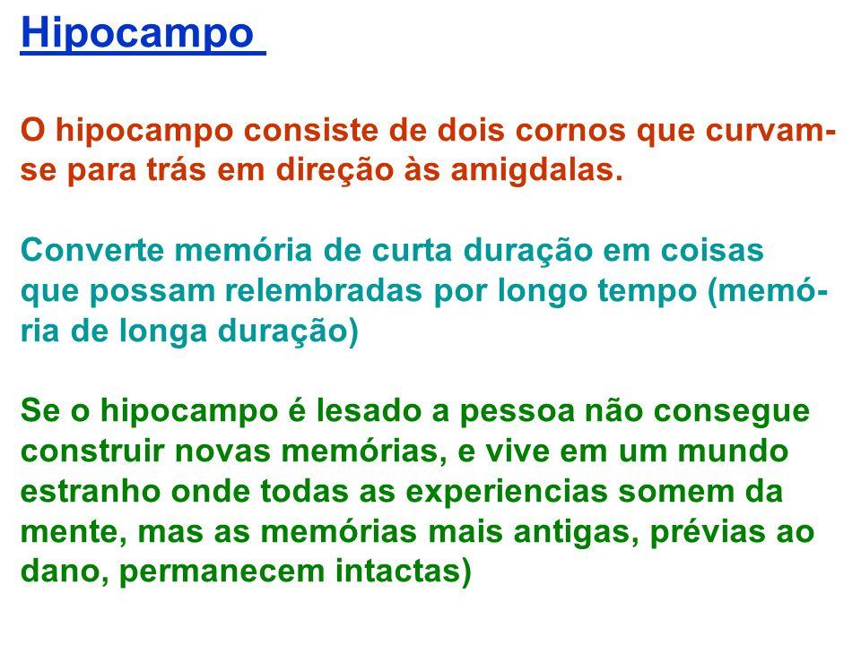 Hipocampo O hipocampo consiste de dois cornos que curvam- se para trás em direção às amigdalas. Converte memória de curta duração em coisas que possam