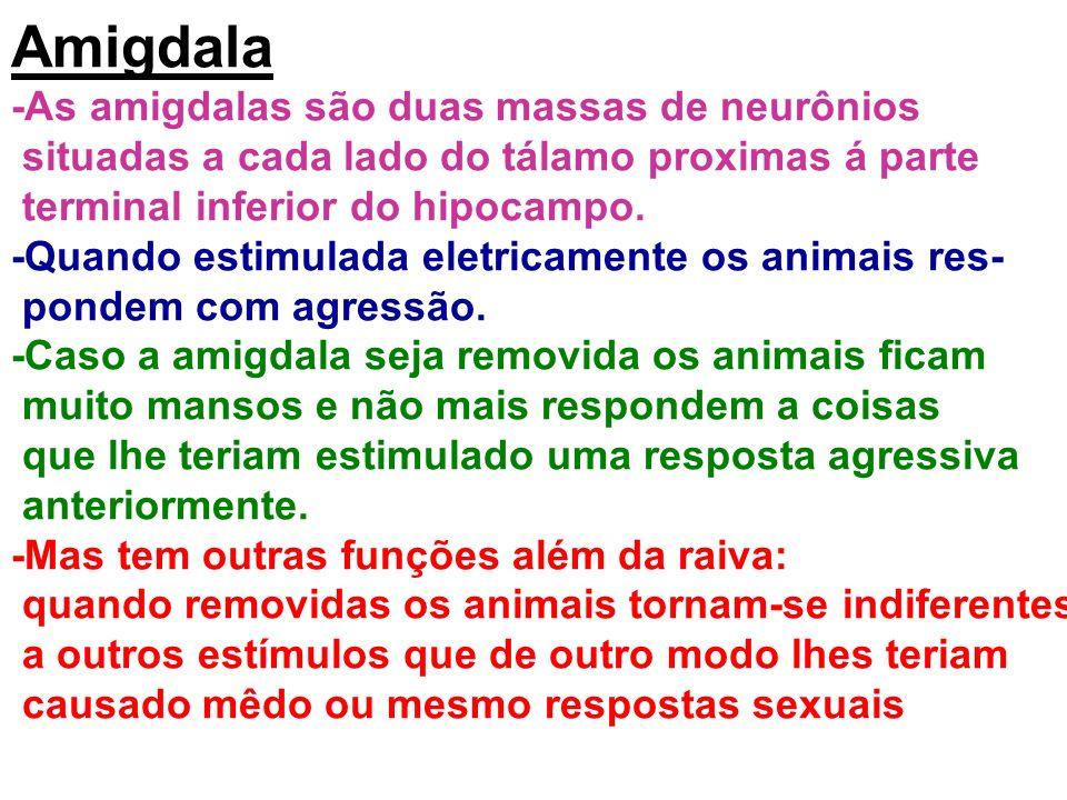 Amigdala -As amigdalas são duas massas de neurônios situadas a cada lado do tálamo proximas á parte terminal inferior do hipocampo. -Quando estimulada
