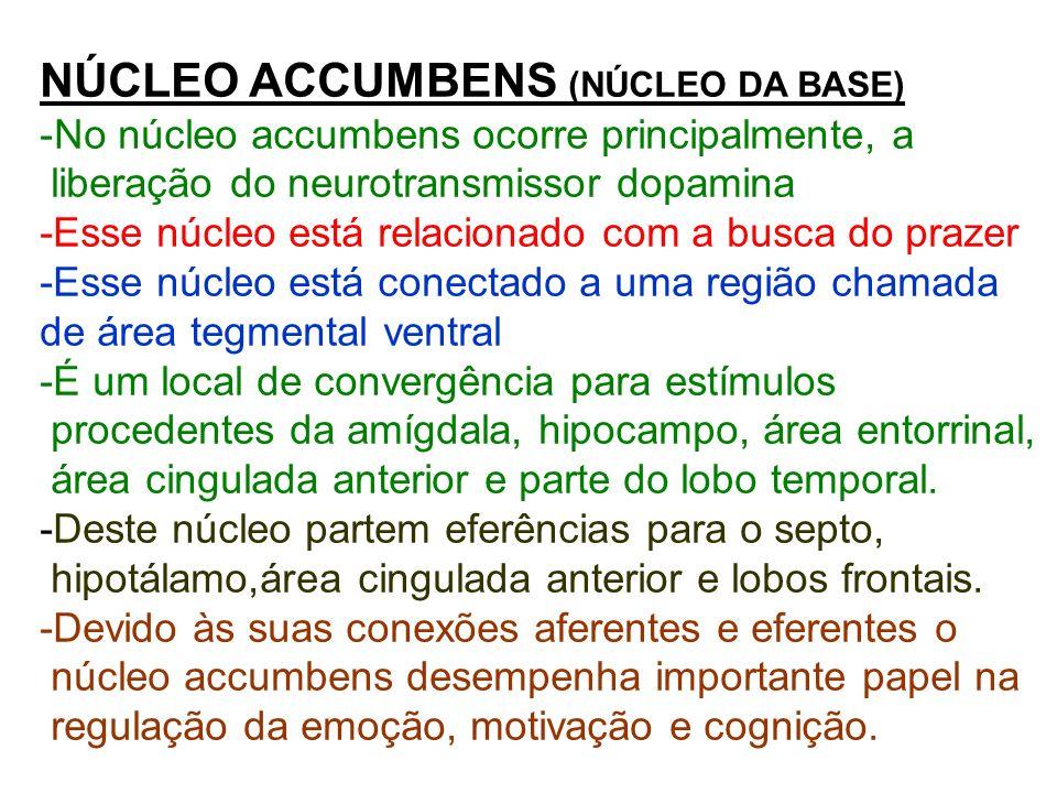 NÚCLEO ACCUMBENS (NÚCLEO DA BASE) -No núcleo accumbens ocorre principalmente, a liberação do neurotransmissor dopamina -Esse núcleo está relacionado c