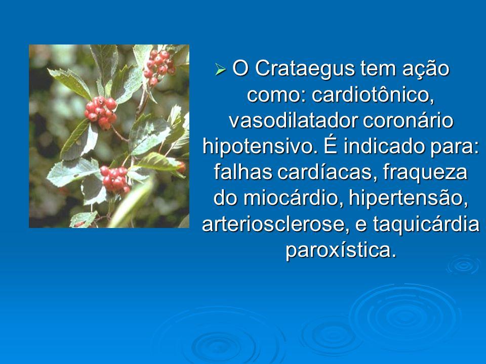 O Crataegus tem ação como: cardiotônico, vasodilatador coronário hipotensivo. É indicado para: falhas cardíacas, fraqueza do miocárdio, hipertensão, a