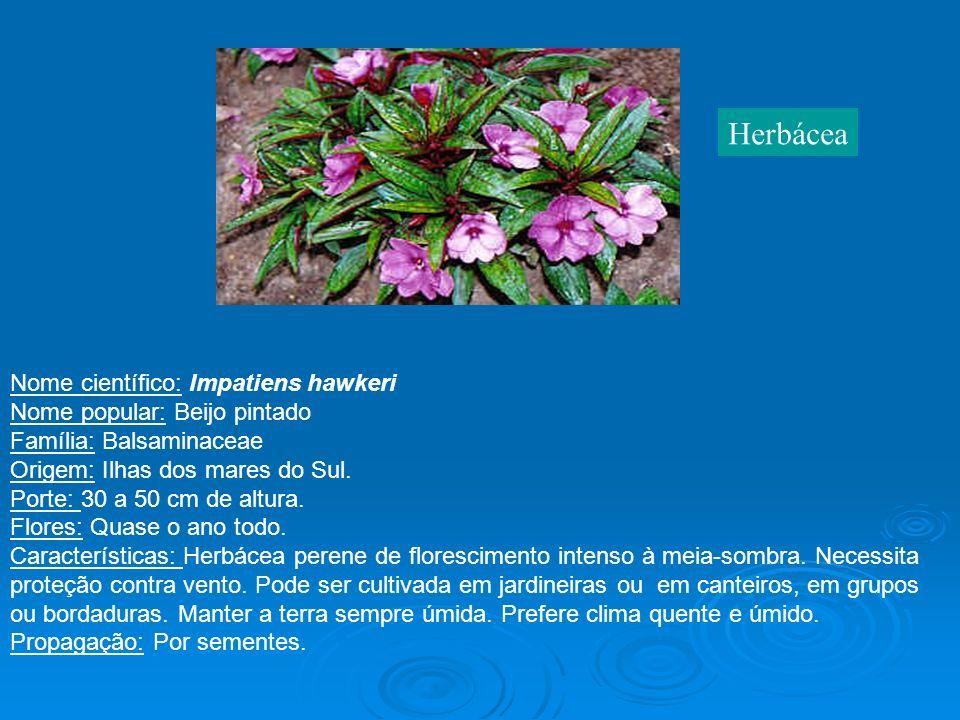 Nome científico: Impatiens hawkeri Nome popular: Beijo pintado Família: Balsaminaceae Origem: Ilhas dos mares do Sul. Porte: 30 a 50 cm de altura. Flo