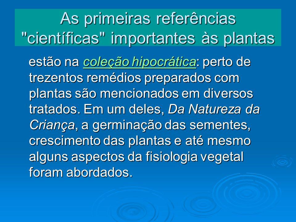 Cheflera-pequena (arbusto) Nome científico:Schefflera arboricola Variegata Nome popular: Cheflera-pequena.