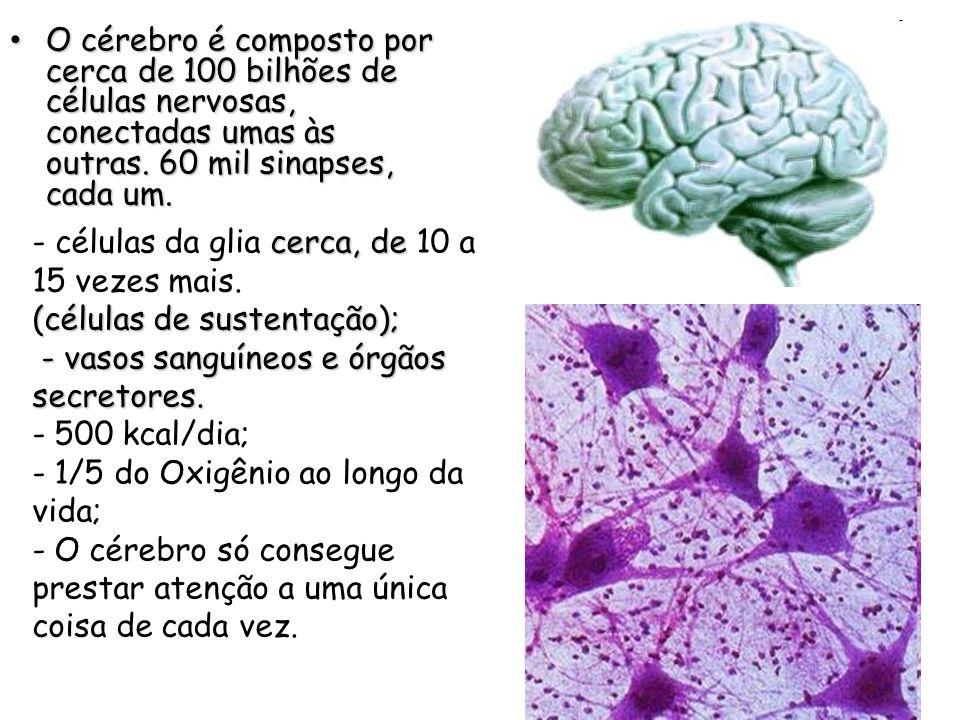 O cérebro é composto por cerca de 100 bilhões de células nervosas, conectadas umas às outras. 60 mil sinapses, cada um. O cérebro é composto por cerca