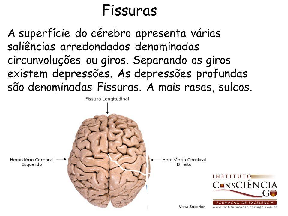A superfície do cérebro apresenta várias saliências arredondadas denominadas circunvoluções ou giros. Separando os giros existem depressões. As depres