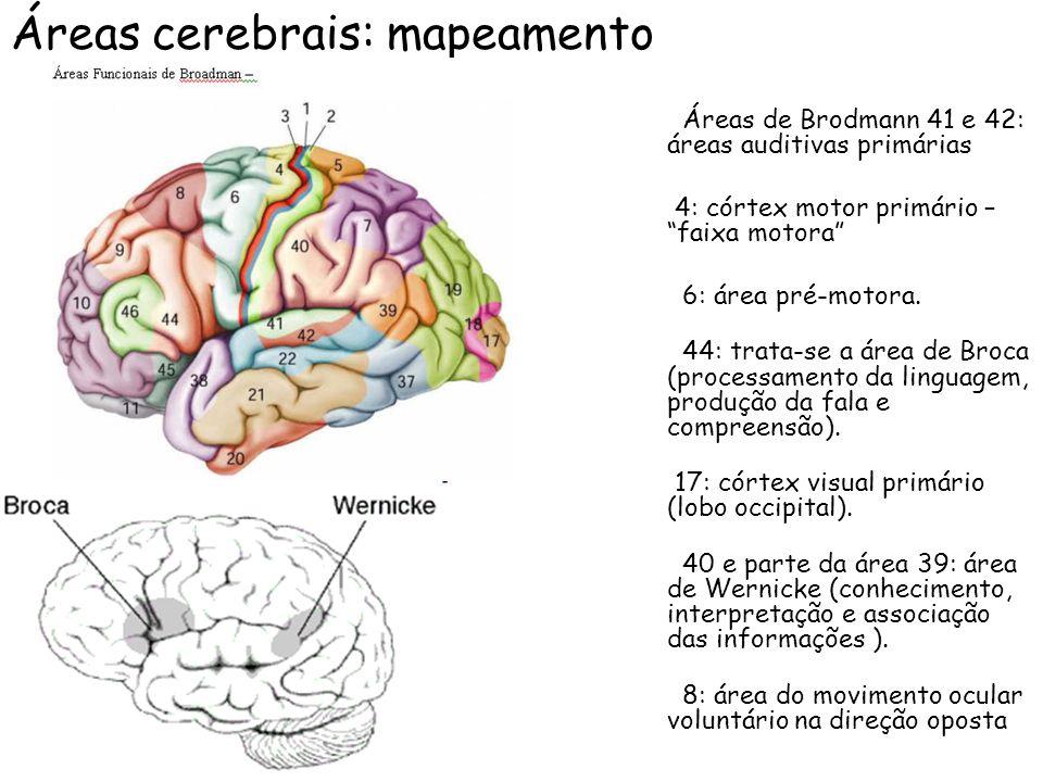Áreas cerebrais: mapeamento Áreas de Brodmann 41 e 42: áreas auditivas primárias 4: córtex motor primário – faixa motora 6: área pré-motora. 44: trata