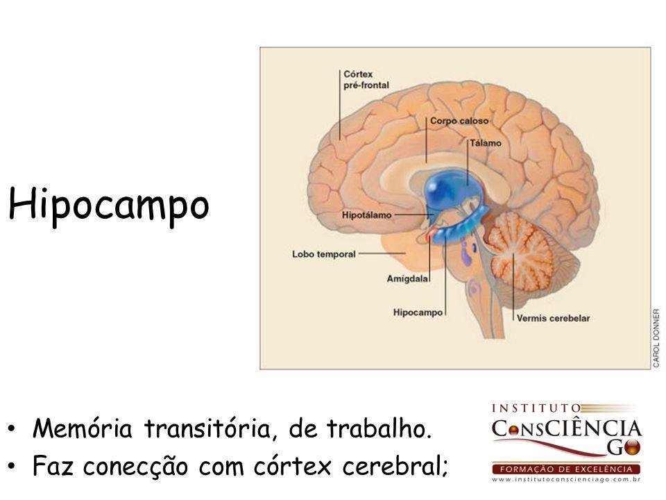 Hipocampo Memória transitória, de trabalho. Faz conecção com córtex cerebral;