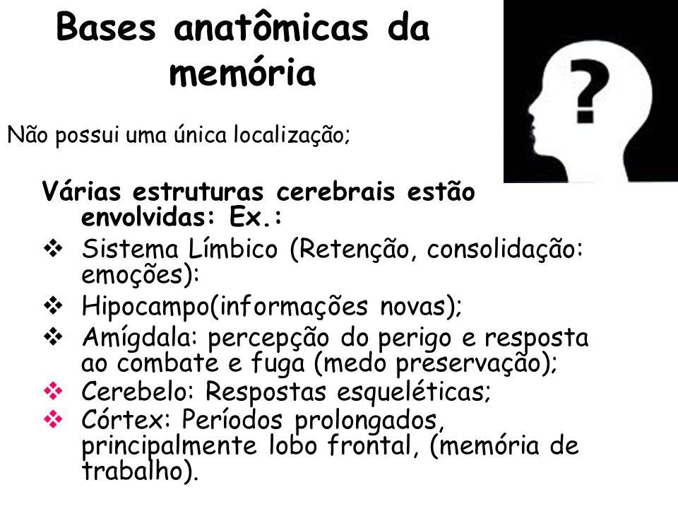 Bases anatômicas da memória Não possui uma única localização; Várias estruturas cerebrais estão envolvidas: Ex.: Sistema Límbico (Retenção, consolidaç