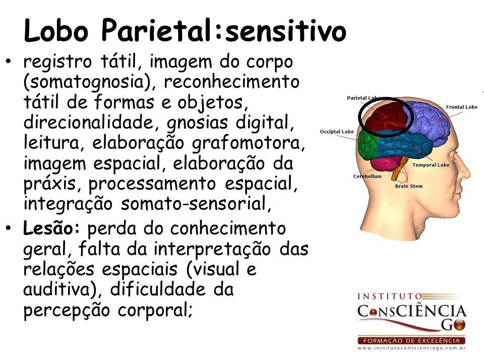 Lobo Parietal:sensitivo registro tátil, imagem do corpo (somatognosia), reconhecimento tátil de formas e objetos, direcionalidade, gnosias digital, le