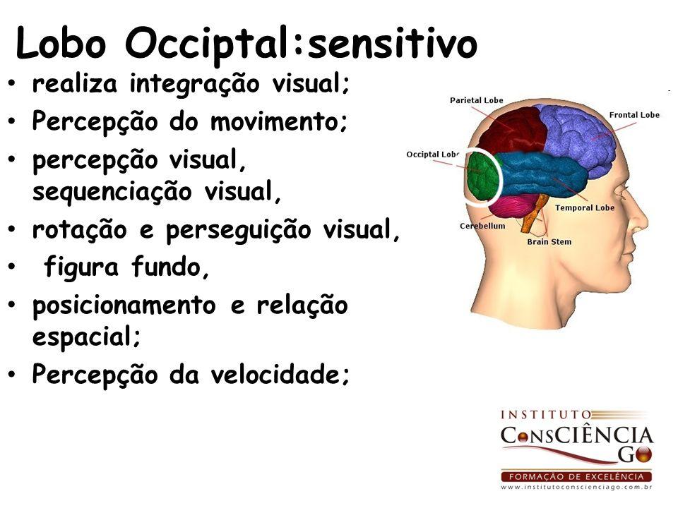 Lobo Occiptal:sensitivo realiza integração visual; Percepção do movimento; percepção visual, sequenciação visual, rotação e perseguição visual, figura