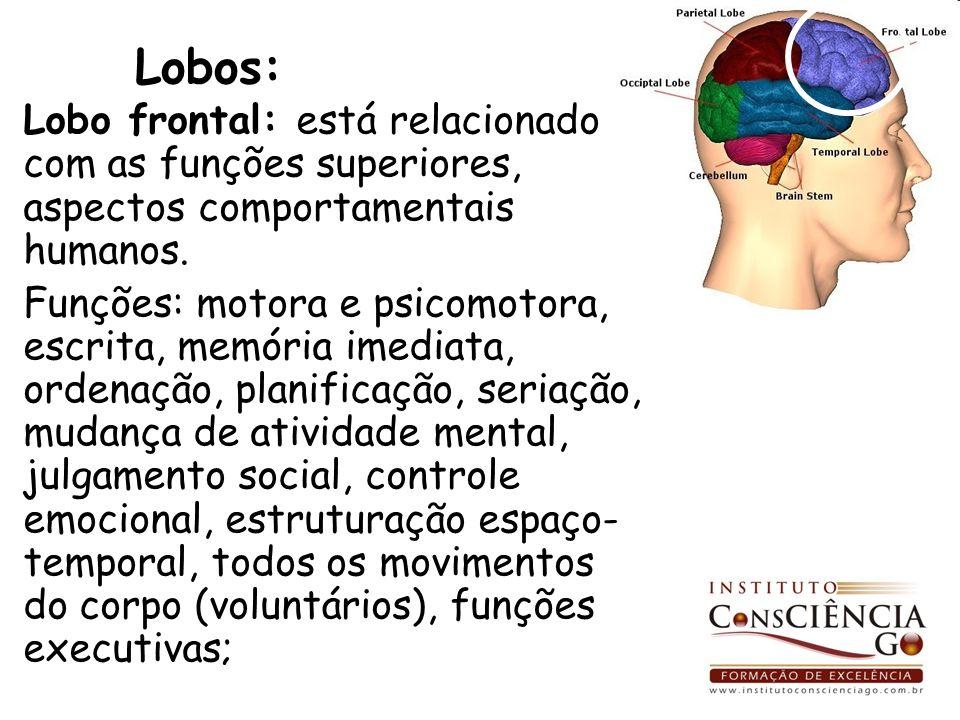 Lobos: Lobo frontal: está relacionado com as funções superiores, aspectos comportamentais humanos. Funções: motora e psicomotora, escrita, memória ime