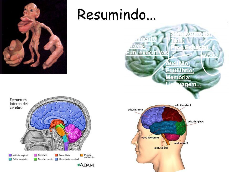 Resumindo... visão Audição; Equilíbrio; Memória; Linguagem... Somatognosia;Tátil; Proc.Espacial...; Pesamento /praxis; Fun. executivas