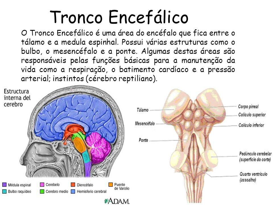 aula 01 Tronco Encefálico O Tronco Encefálico é uma área do encéfalo que fica entre o tálamo e a medula espinhal. Possui várias estruturas como o bulb