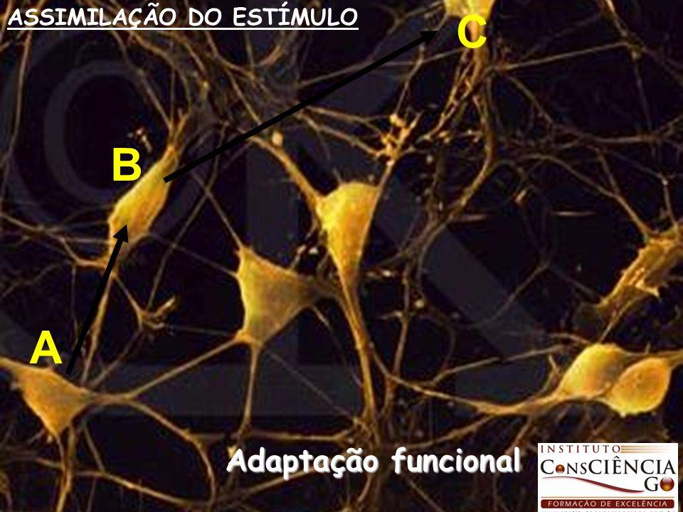 A B C ASSIMILAÇÃO DO ESTÍMULO Adaptação funcional