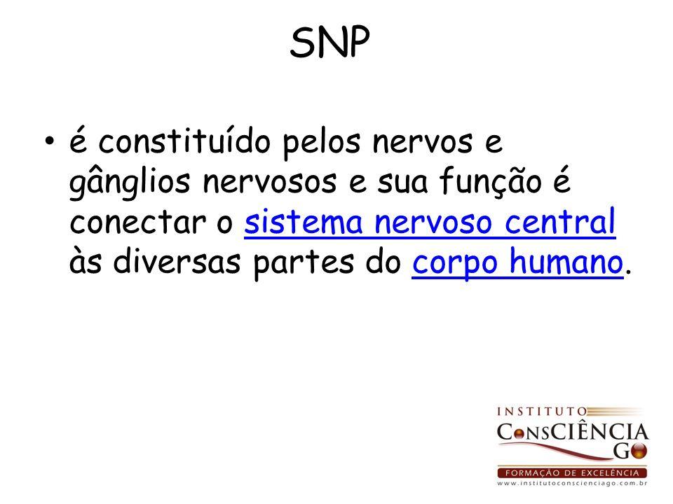 SNP é constituído pelos nervos e gânglios nervosos e sua função é conectar o sistema nervoso central às diversas partes do corpo humano.sistema nervos