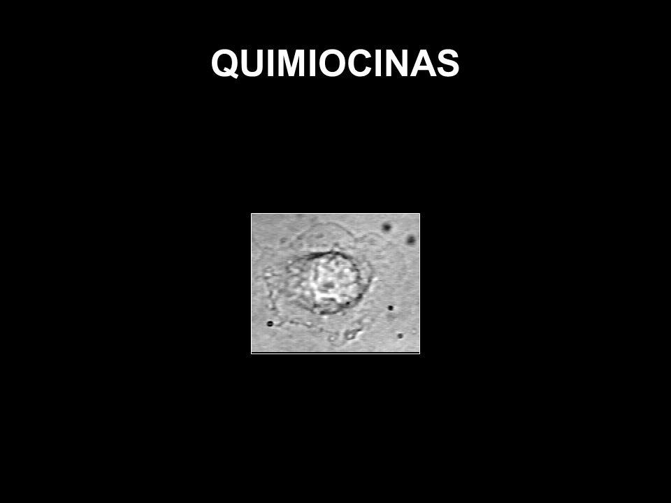 QUIMIOCINAS