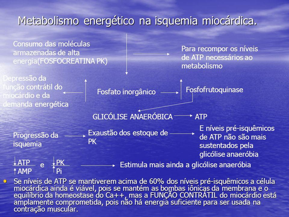 Metabolismo energético na isquemia miocárdica. Se níveis de ATP se mantiverem acima de 60% dos níveis pré-isquêmicos a célula miocárdica ainda é viáve
