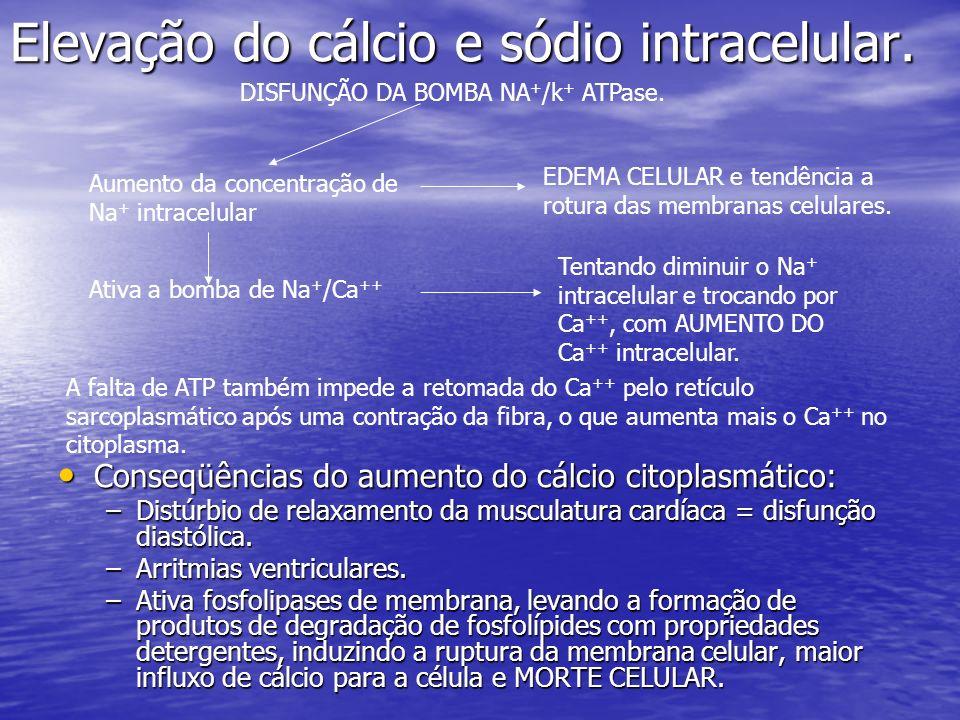 Elevação do cálcio e sódio intracelular. Conseqüências do aumento do cálcio citoplasmático: Conseqüências do aumento do cálcio citoplasmático: –Distúr