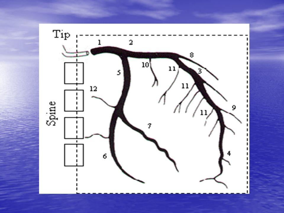 Conceito de miocárdio hibernante È uma disfunção contrátil persistente em repouso que está associada com fluxo coronariano reduzido, porém existe viabilidade miocárdica.