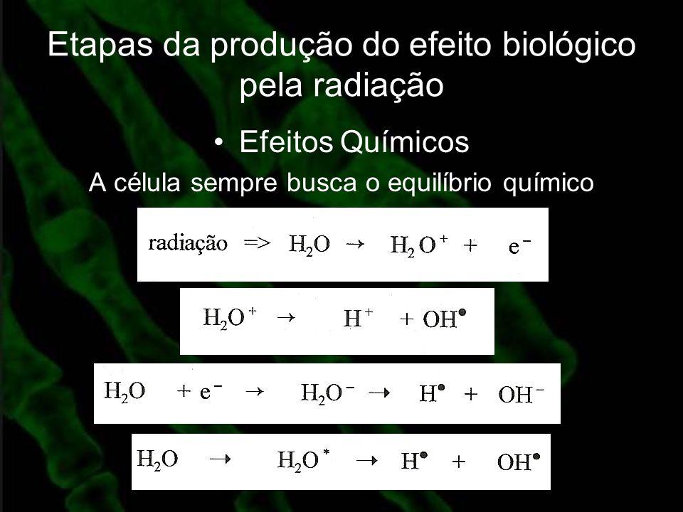 Etapas da produção do efeito biológico pela radiação Efeitos Químicos A célula sempre busca o equilíbrio químico