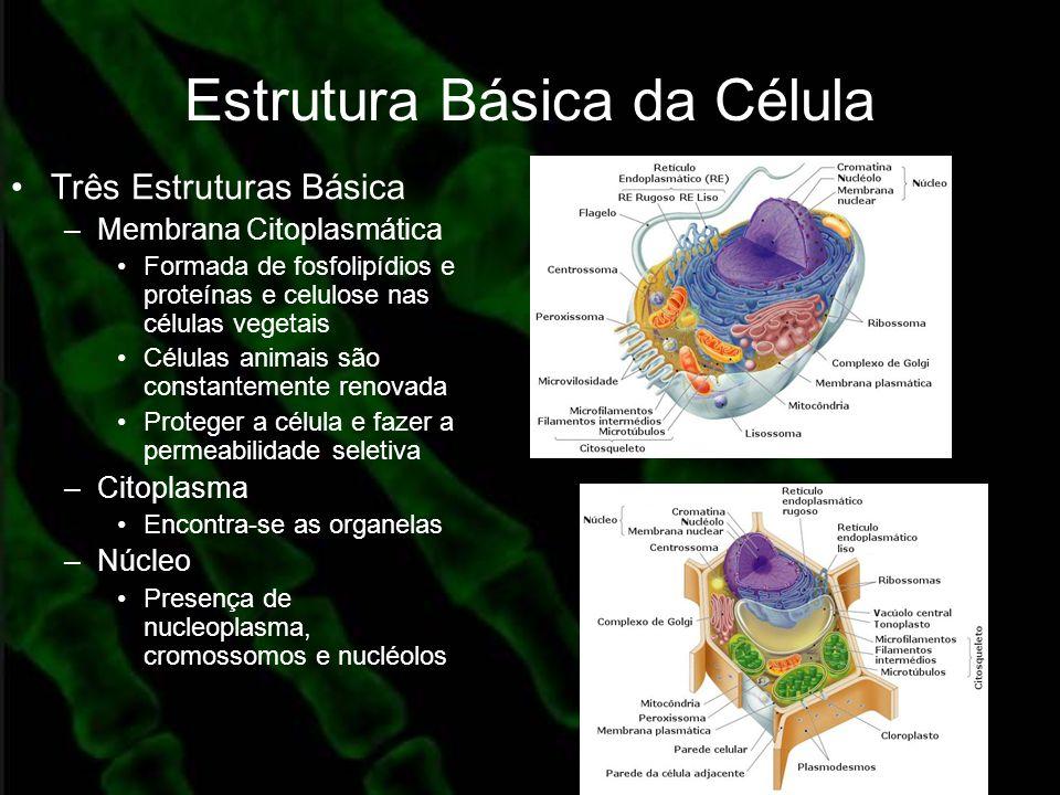 Estrutura Básica da Célula Três Estruturas Básica –Membrana Citoplasmática Formada de fosfolipídios e proteínas e celulose nas células vegetais Célula