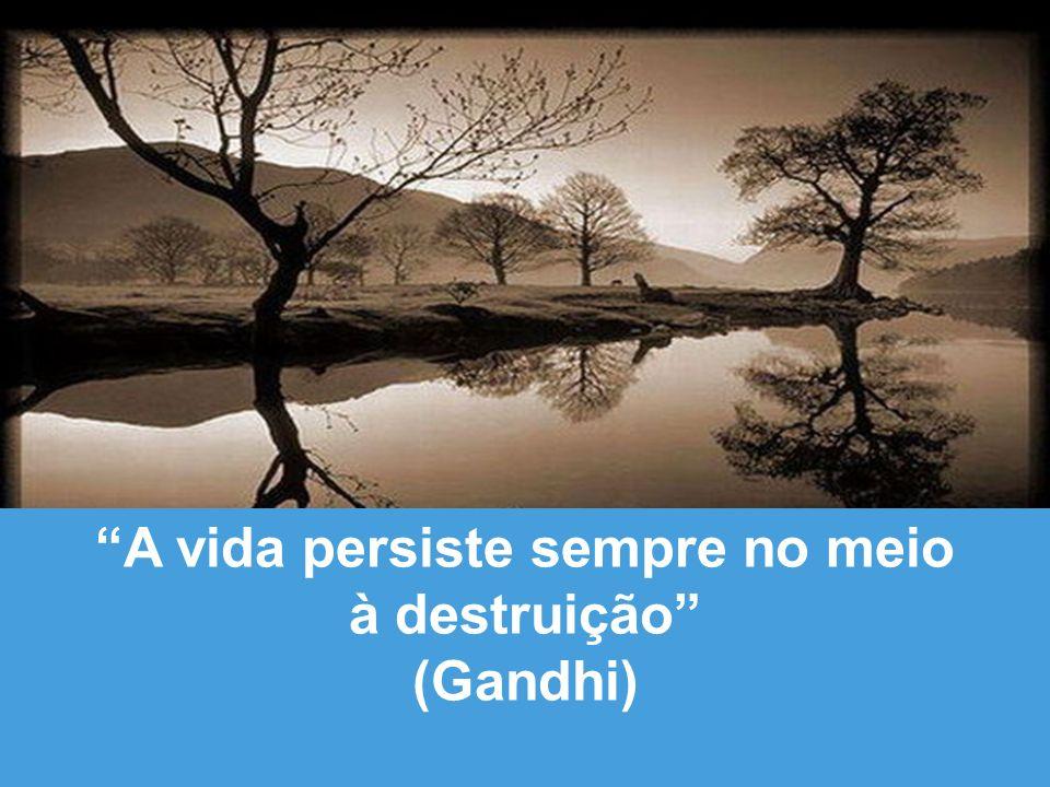 A vida persiste sempre no meio à destruição (Gandhi)