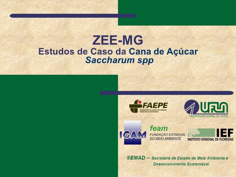 SEMAD – Secretaria de Estado de Meio Ambiente e Desenvolvimento Sustentável ZEE-MG Estudos de Caso da Cana de Açúcar Saccharum spp