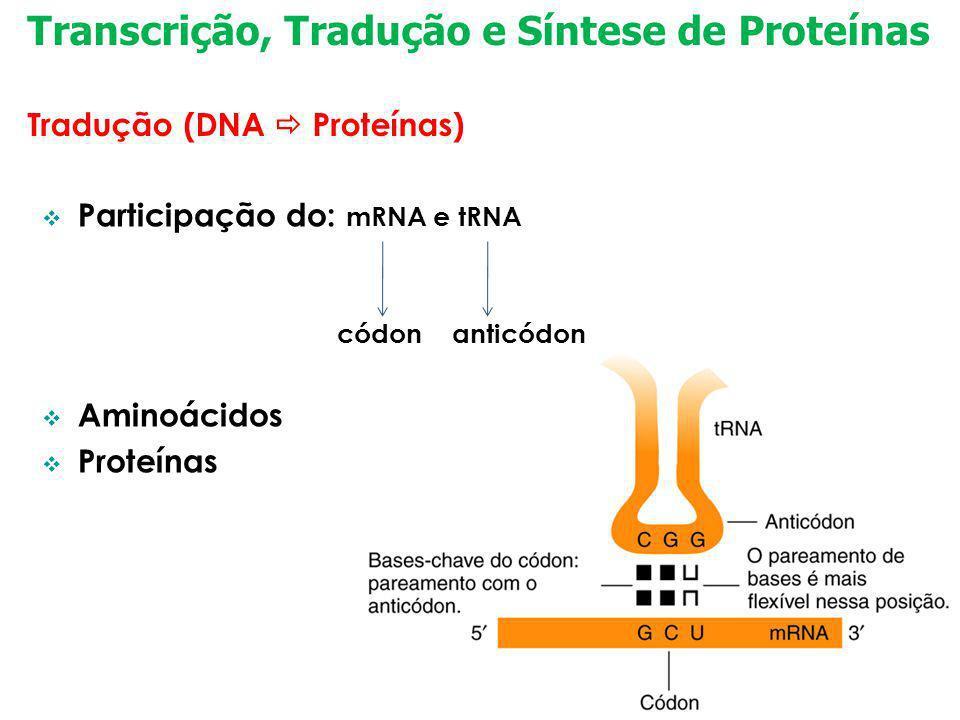 Transcrição, Tradução e Síntese de Proteínas Tradução (DNA Proteínas) Participação do: mRNA e tRNA códon anticódon Aminoácidos Proteínas