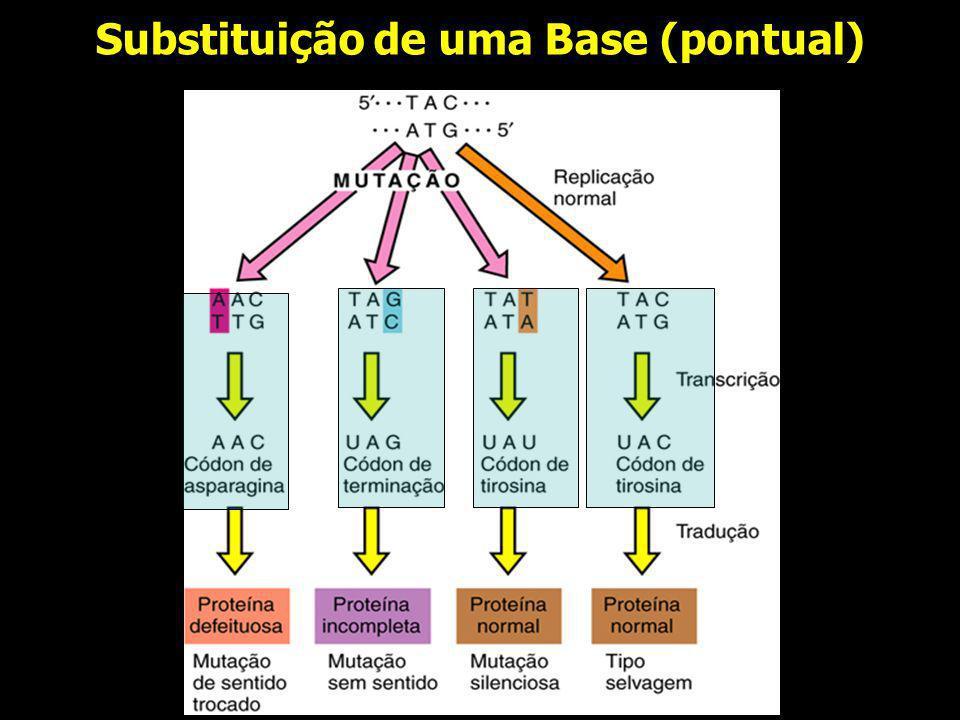 Substituição de uma Base (pontual)