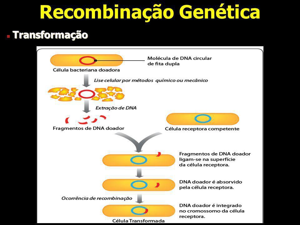 Recombinação Genética Transformação