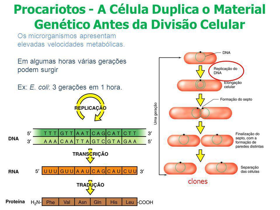 Os microrganismos apresentam elevadas velocidades metabólicas. Em algumas horas várias gerações podem surgir Ex: E. coli: 3 gerações em 1 hora. clones