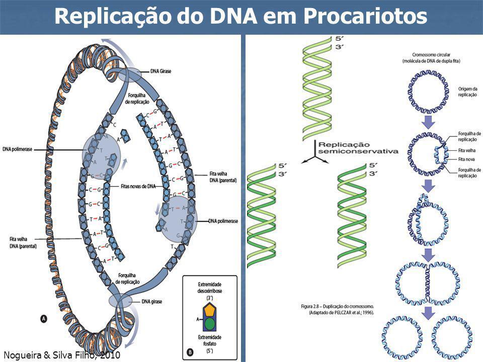 Replicação do DNA em Procariotos Nogueira & Silva Filho, 2010