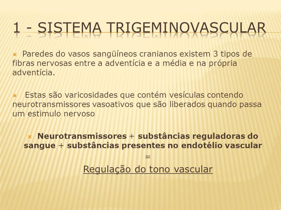 Fibras simpáticas (gânglio cervical superior): noradrenalina, peptídeo Y de ação vasoconstritora.