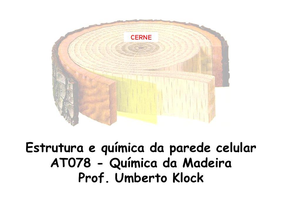Estrutura e química da parede celular AT078 - Química da Madeira Prof. Umberto Klock