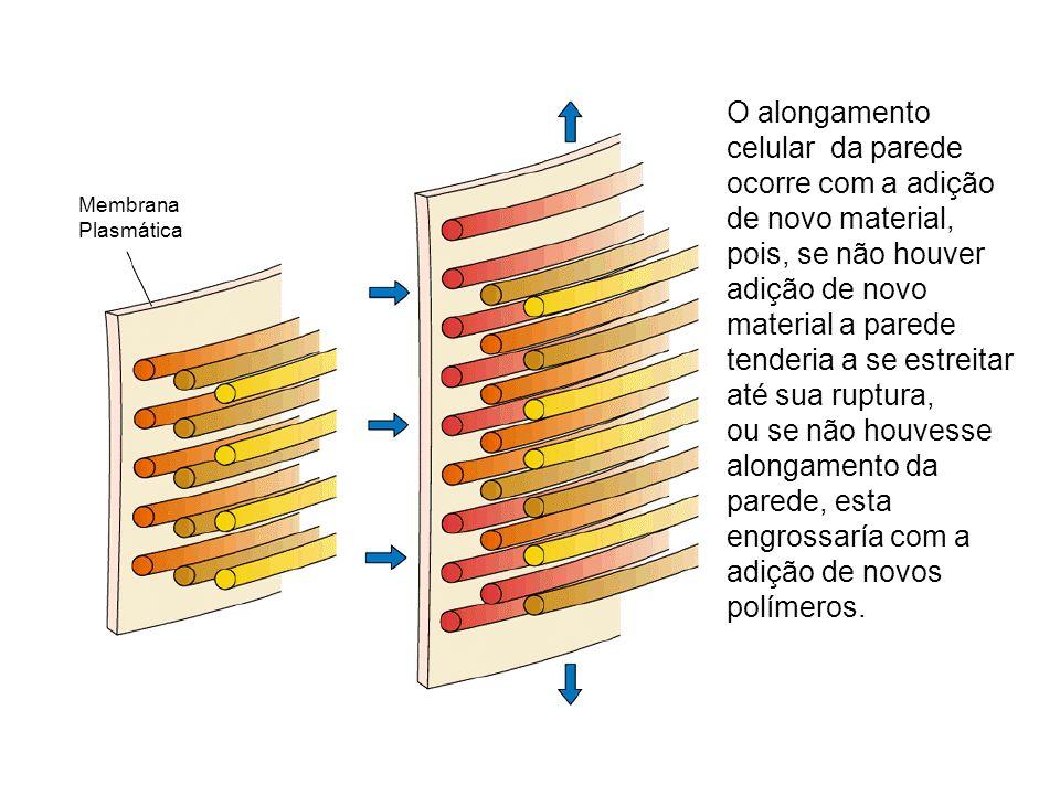 Membrana Plasmática O alongamento celular da parede ocorre com a adição de novo material, pois, se não houver adição de novo material a parede tenderi