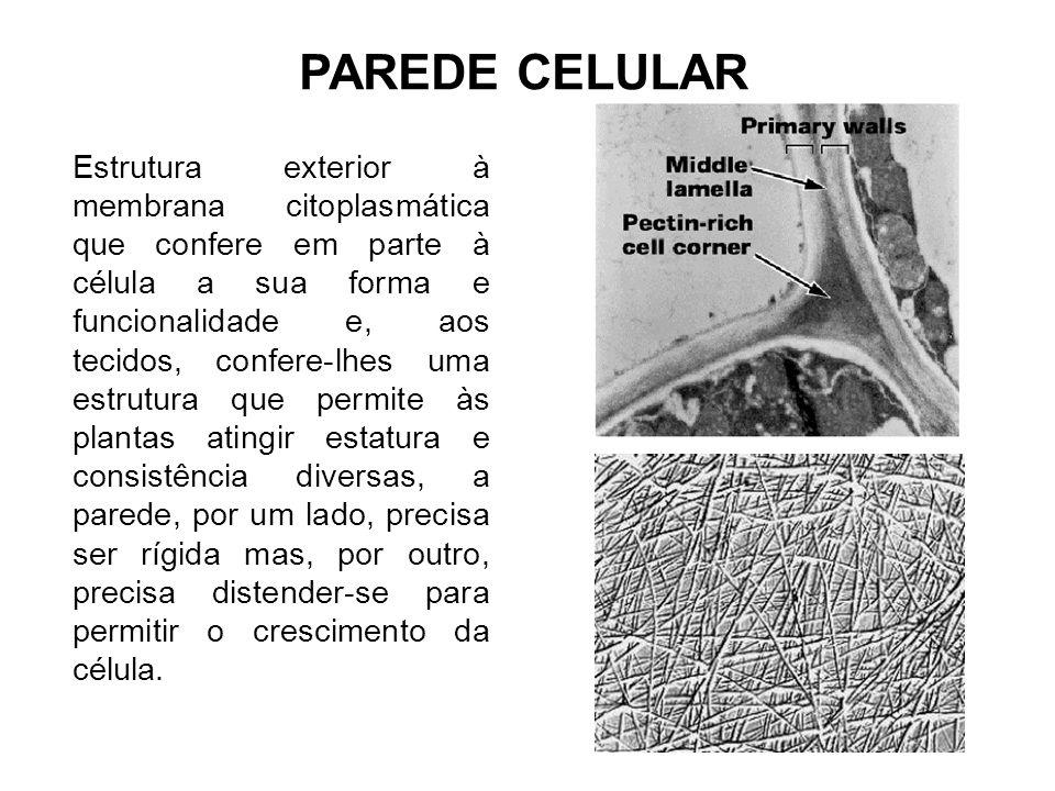 Estrutura exterior à membrana citoplasmática que confere em parte à célula a sua forma e funcionalidade e, aos tecidos, confere-lhes uma estrutura que