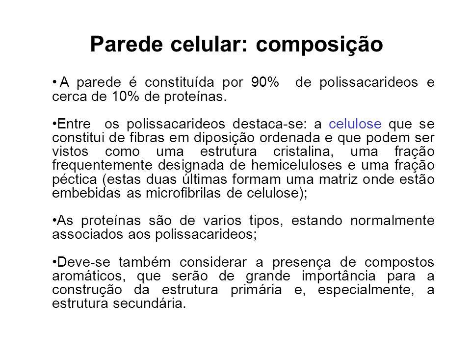 Representação da Parede Celular Celulose Polioses Lignina