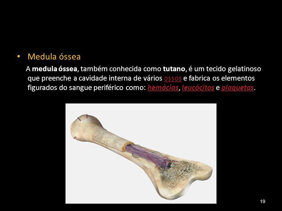 Medula óssea A medula óssea, também conhecida como tutano, é um tecido gelatinoso que preenche a cavidade interna de vários ossos e fabrica os element