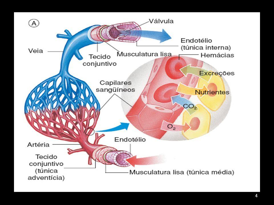 Coração Órgão muscular oco 4 cavidades: 2 átrios e 2 ventrículos Localização: cavidade torácica ( mediastino ) Revestido por um saco fibroso ( pericárdio ) 5