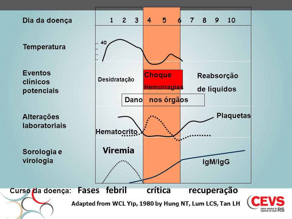 1 2 3 4 5 6 7 8 9 10 40 Viremia Curso da doença: Fases febril crítica recuperação Choque Hemorragias Reabsorção de líquidos Desidratação Dano nos órgãos Dia da doença Temperatura Eventos clínicos potenciais Alterações laboratoriais Sorologia e virologia Plaquetas Hematocrito IgM/IgG Adapted from WCL Yip, 1980 by Hung NT, Lum LCS, Tan LH