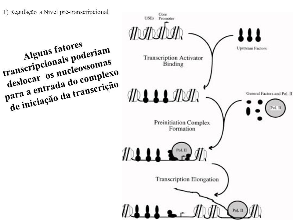RNA polimerase pode deslocar temporariamento os nucleossomas 1) Regulação a Nível pré-transcripcional