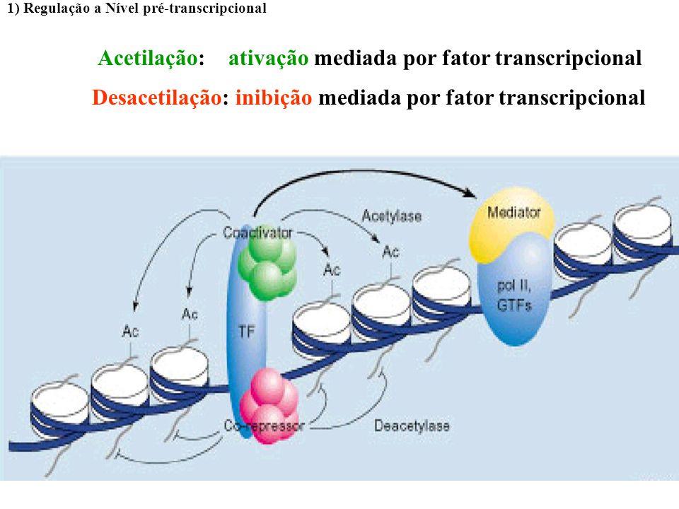 Acetilação das histonas: aumento da transcrição 1) Regulação a Nível pré-transcripcional