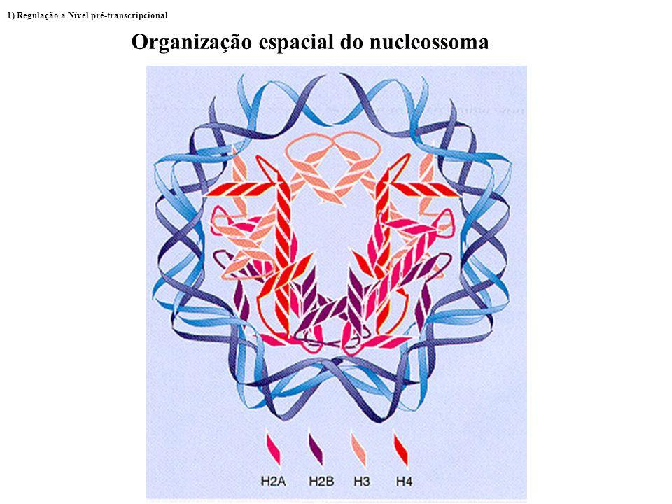 Alterações na estrutura do Nucleossoma DNA Histonas Estrutura 1) Regulação a Nível pré-transcripcional