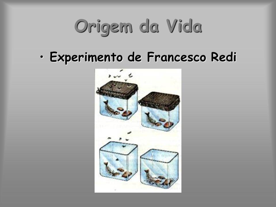 Origem da Vida Experimento de Francesco RediExperimento de Francesco Redi