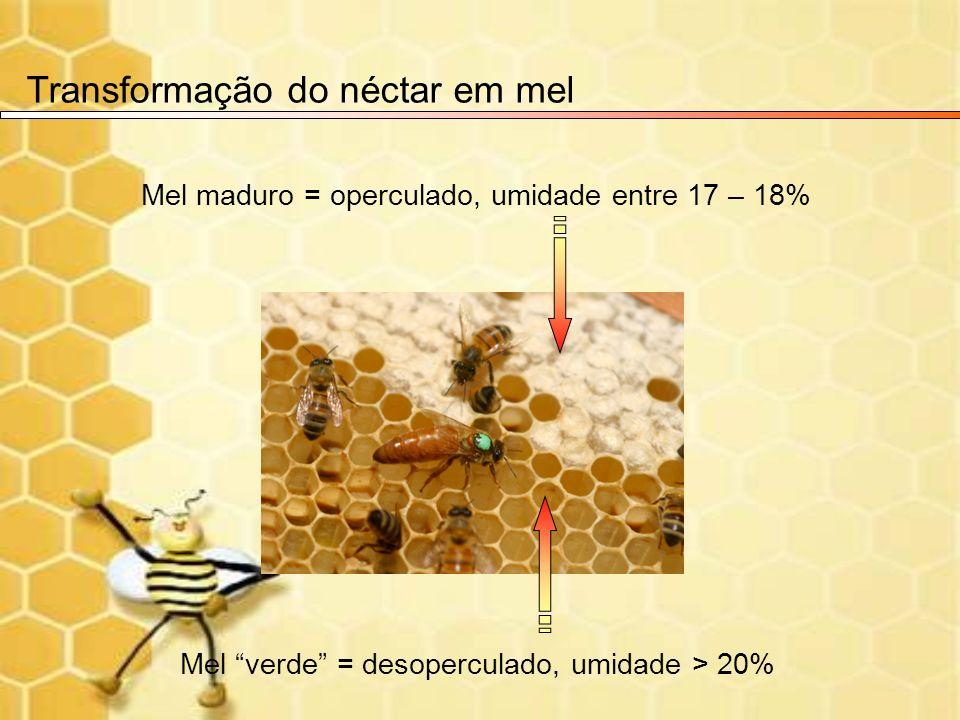 Mel maduro = operculado, umidade entre 17 – 18% Transformação do néctar em mel Mel verde = desoperculado, umidade > 20%
