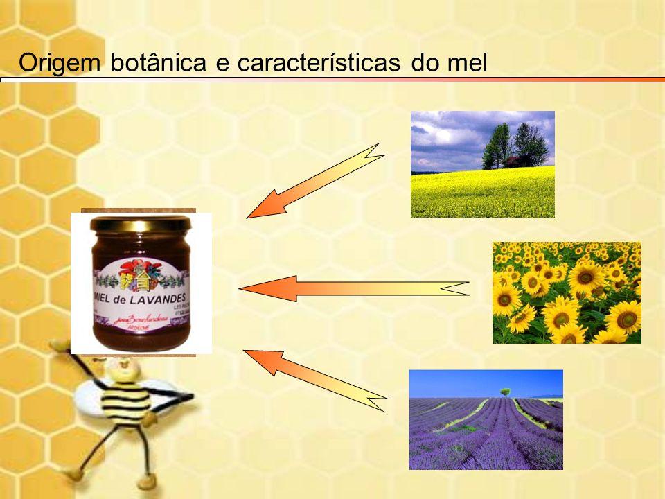Origem botânica e características do mel