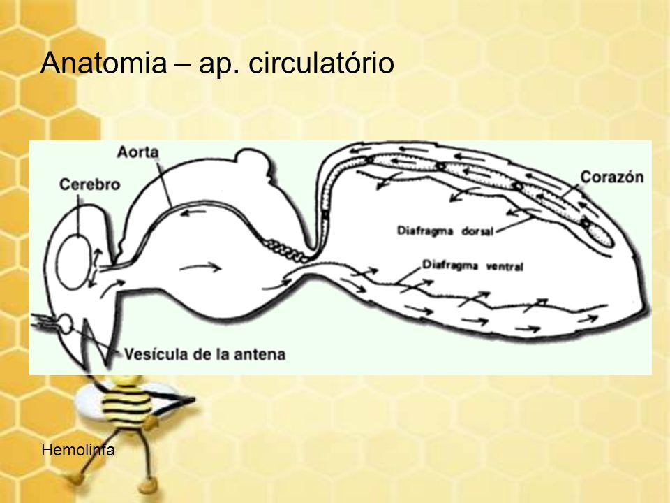 Anatomia – ap. circulatório Hemolinfa
